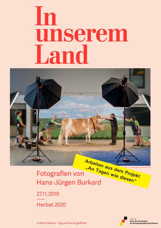 Poster with a photo scene, on which a cow is standing in a photo studio surrounded by people.